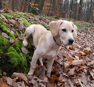 Belem en forêt