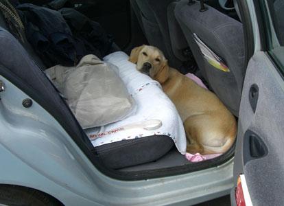 Belem à sa place dans la voiture
