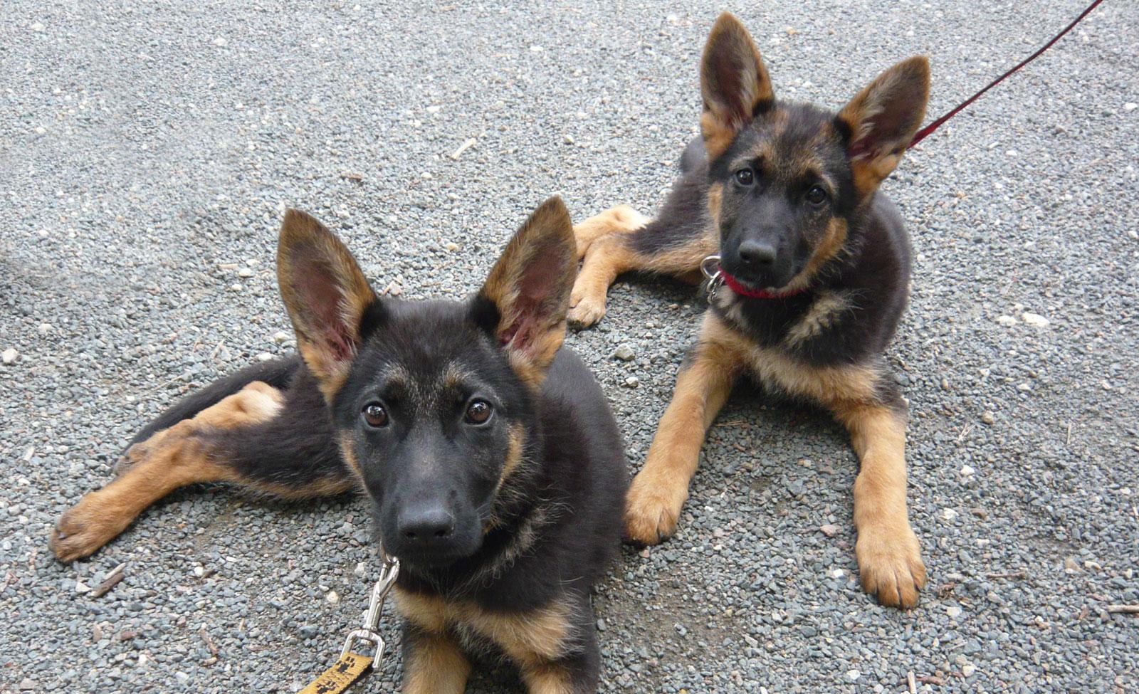 Loya et Lixy