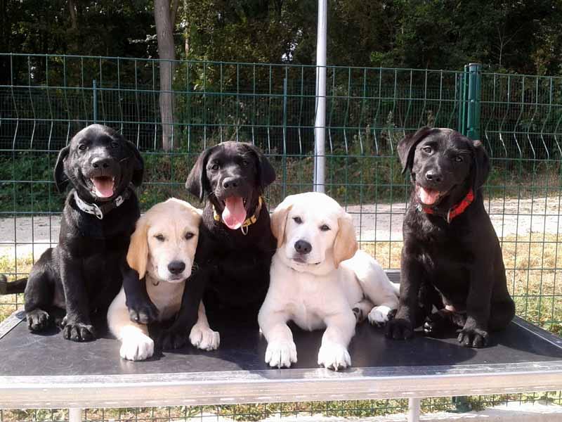 Mistral, Mistik, Minka, Monty et Melda