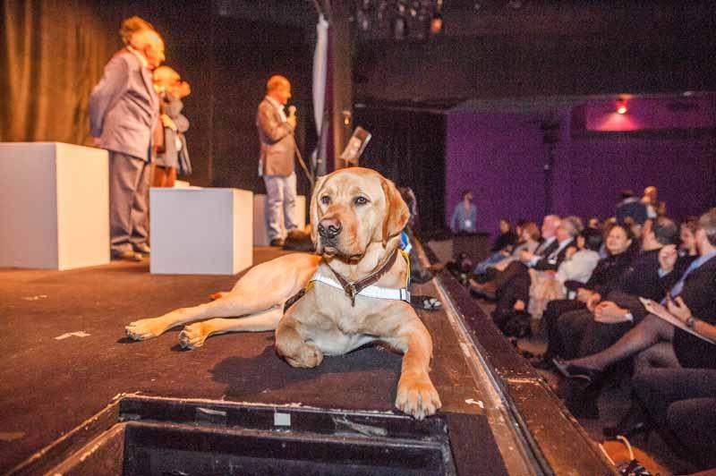 theatre-chien-guide01.jpg
