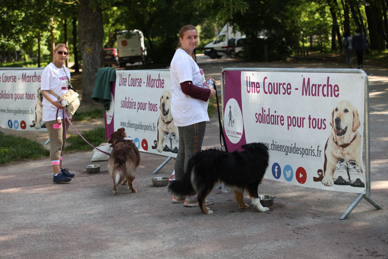 chiens-guides-30ans-marche-129.jpg