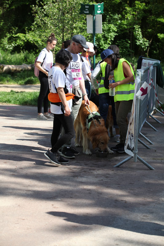 chiens-guides-30ans-marche-235.jpg