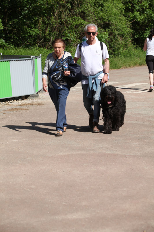 chiens-guides-30ans-marche-236.jpg