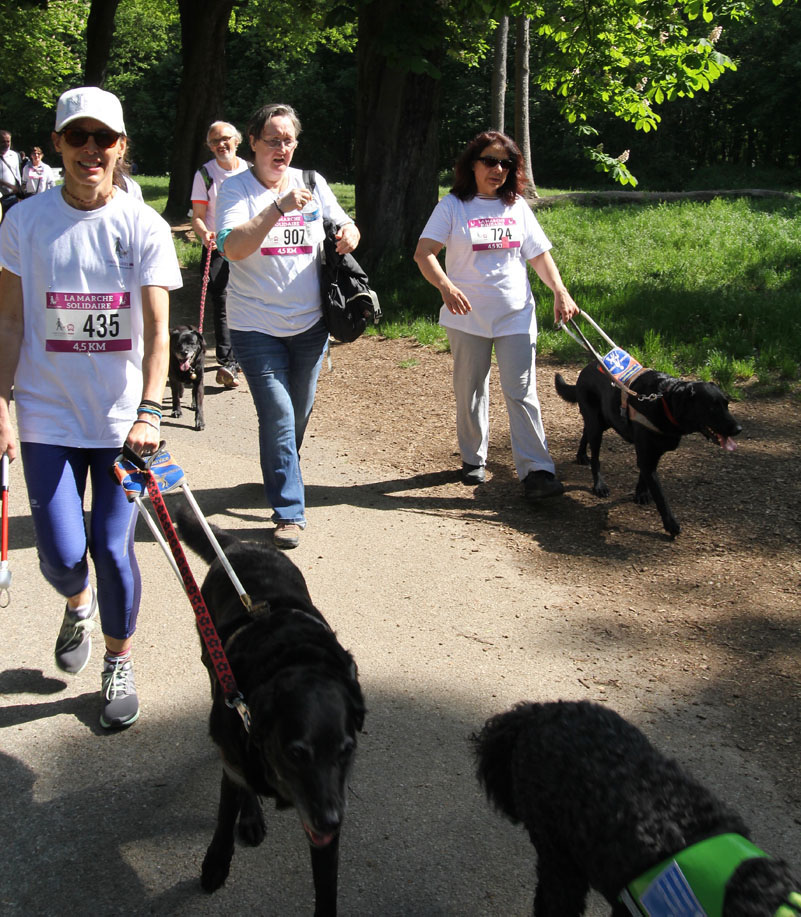chiens-guides-30ans-marche-445.jpg