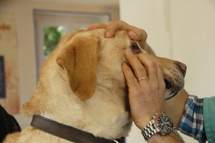 chien-guide-paris-veterinaire-01.jpg