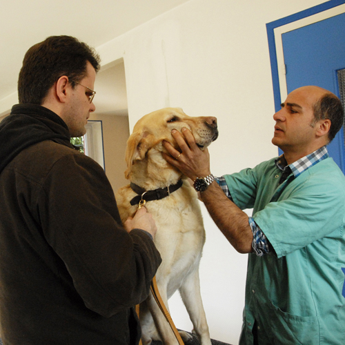 chien-guide-paris-veterinaire-05.jpg