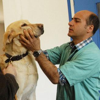 examen vétérinaire