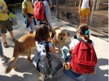 Des élèves de 6ème à l'école des Chiens Guides de Paris